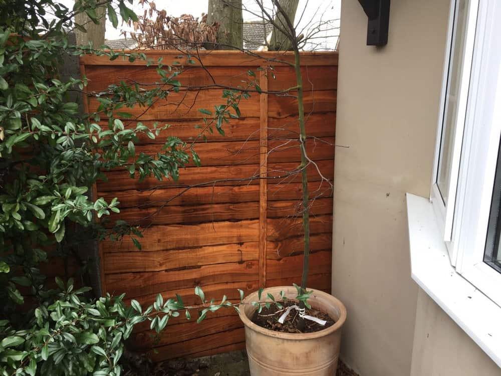 garden fencing kent overlap panel