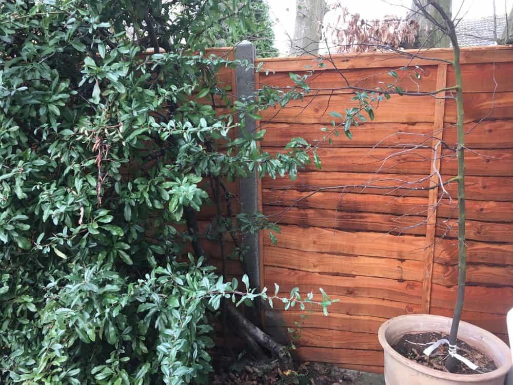 garden fencing kent