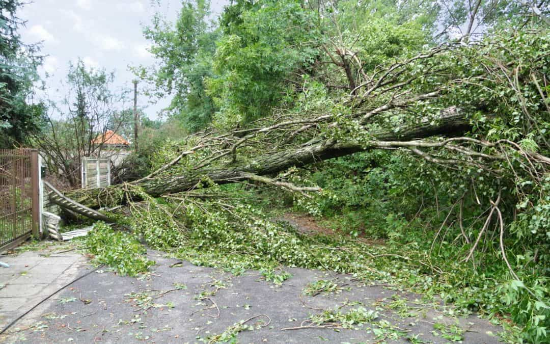 Fence Damage Repairs | Storm Erik